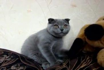 Chat veut des bisoux