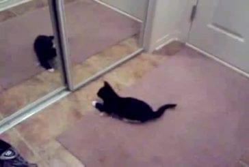 Chaton et miroir