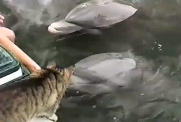 Chat et dauphin sont les meilleurs amis