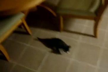 Chat fait un saut