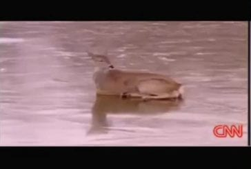 Intelligent sauvetage de cerfs