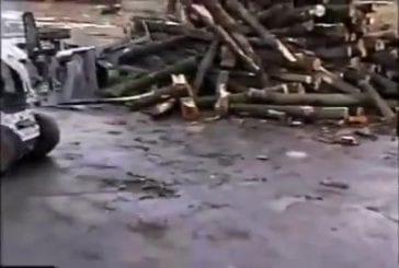 Machine incroyable pour couper le bois