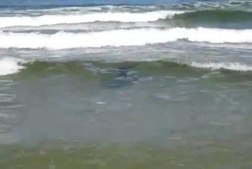 Requin des mers