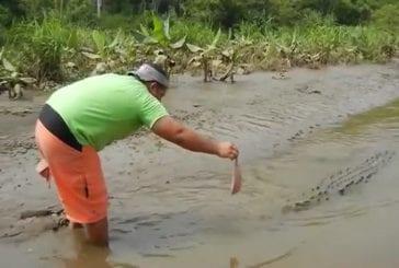 Crocodile au Costa Rica