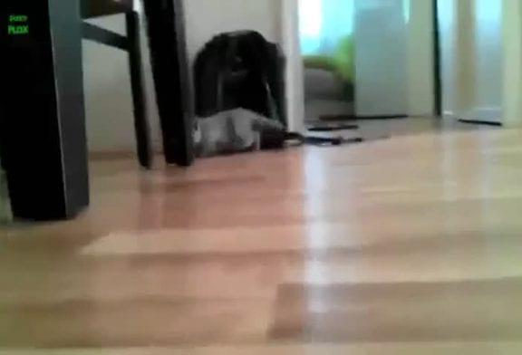 Chat surgit quand on s'y attend le moins