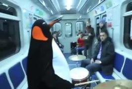Pingouin fait un solo de batterie dans le métro