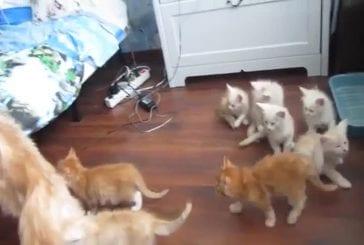 Mignons chatons courrent se mettre à l'abri