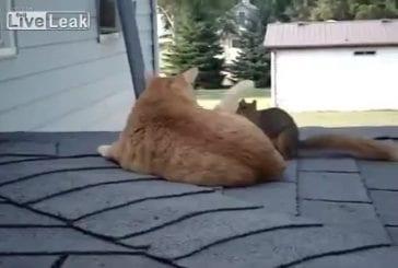 Vieux amis écureuil et chat se retrouvent enfin