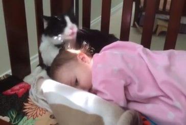 Chat lèche le visage du bébé