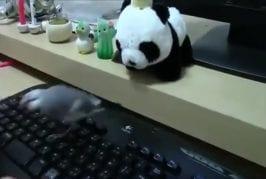 Ne touchez pas mon clavier