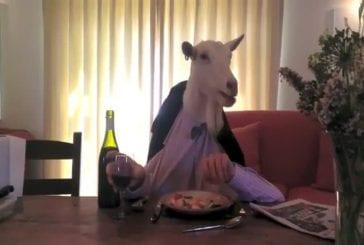 Chèvre mange son dîner
