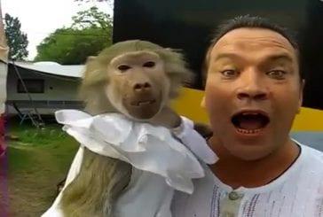 Les singes sont monstrueux