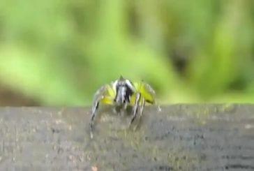 Araignée semble complètement surprise