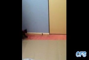 Compilation de chatons contre des arrêts de porte