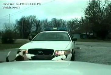 Bull Dogs vs voiture de flic