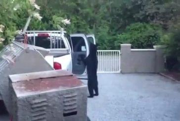 Ours ouvre la porte de la voiture