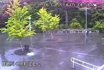 Foudre souffle un arbre