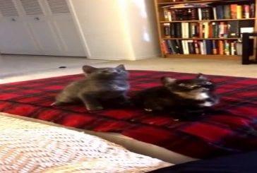 Bisous de chatons