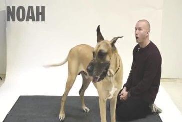 Comment réagissent les chiens quand un homme aboie