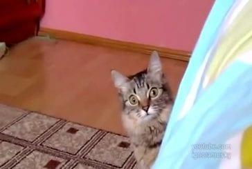 Ce chat est en train de comploter quelque chose de diabolique