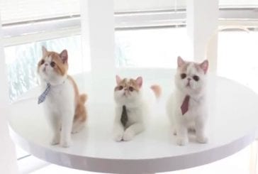 Trois chatons à la recherche d'emplois