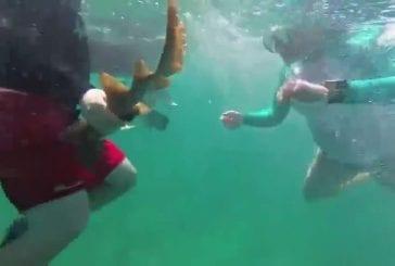 Mignone attaque de requin