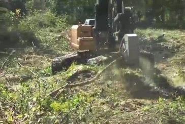 Comment pulvériser un arbre en quatre secondes