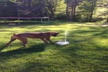Chiot aime sa nouvelle fontaine d'eau