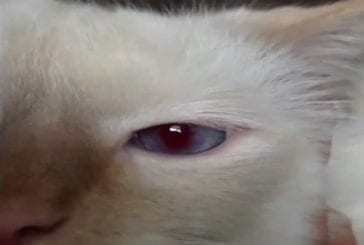 Les pupilles de ce chat se dilatent avec le son