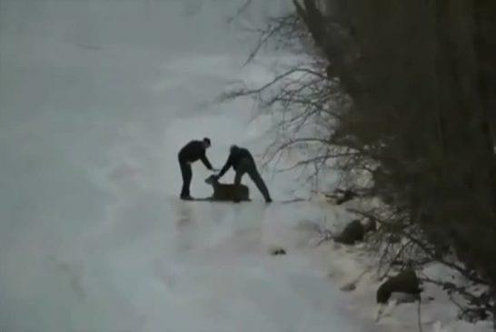 Sauvetage en hélicoptère de 2 cerfs prisonniers d'un lac gelé
