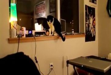 Des chats vraiment pas sympas