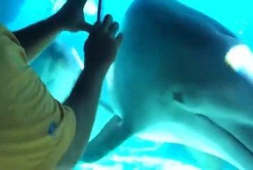 Appeler un dauphin avec un peigne