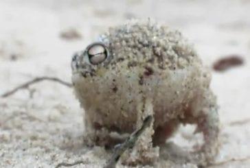 Grenouille la plus adorable du monde