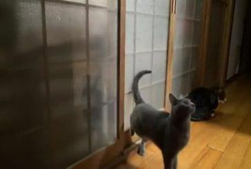 Chat frappe rapidement à la porte pour entrer
