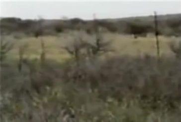 Lions attaquent un chasseur lors d'un safari