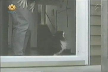 Chats ne comprend pas que la porte n'a plus de vitre