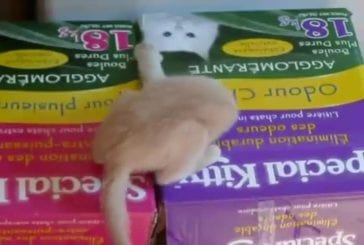 Chaton se glisse dans un trou de souris