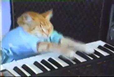 Chaton joue du piano