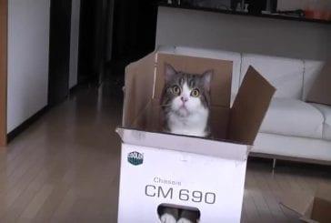 Grande boîte à mattou