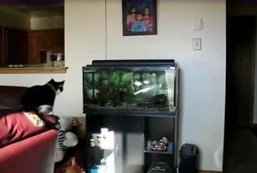 Chat vs aquarium