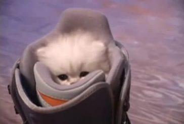 Petit minou mais grand miaou