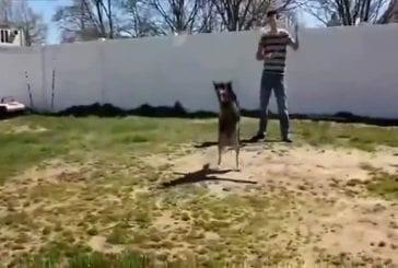 Chien fait de la double corde à sauter