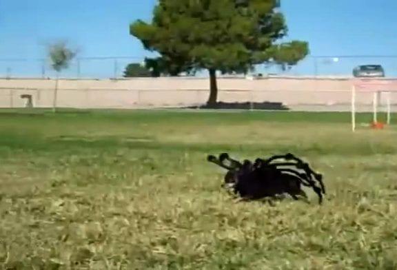 Une araignée géante terrorise la ville