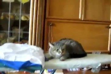 Ce chat a un mauvais caractère