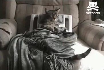 Chat stressé profite d'un massage relaxant
