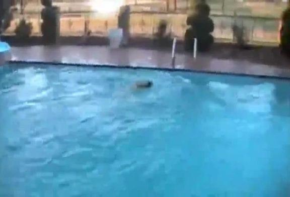 Chien grimpe à l'échelle et saute dans la piscine