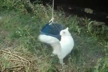 Un chat appelle son ascenseur