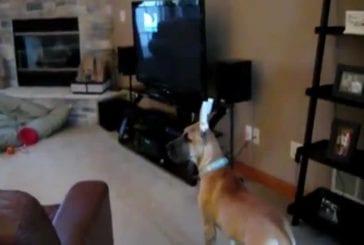 Compilation de chiens effrayés