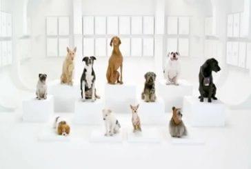 Chorale de chiens