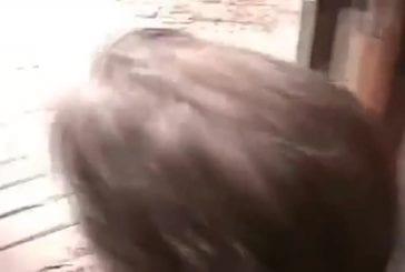 Ecureuil mort un enfant qui a peur d'attraper la rage
